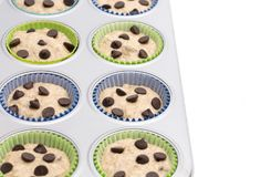 Chocolate Chip Muffins fotografia de stock royalty free