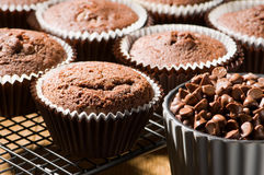 Free Chocolate Chip Muffins Stock Photography - 13131782