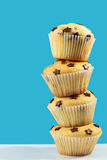 Chocolate chip muffins Royalty Free Stock Photos
