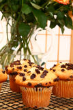 Chocolate Chip Muffins stock photos