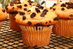 Free Chocolate Chip Muffins Royalty Free Stock Photography - 5470487