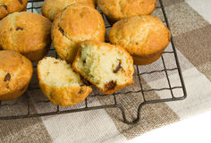 Chocolate chip muffins. Freshly baked chocolate chip muffins cooling on a wire rack Stock Image