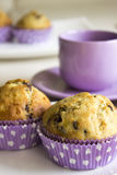 Chocolate Chip Muffins Stock Image