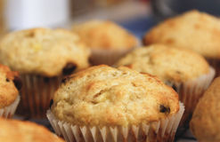 Chocolate chip muffins fresh out of oven Royalty Free Stock Images