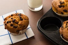 Chocolate chip muffins in pan Royalty Free Stock Photography