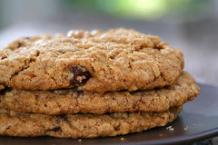 Chocolate chip oatmeal walnut cookies. Prepared on a plate in home kitchen Stock Images