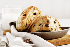 Chocolate Chip Scones royalty free stock image