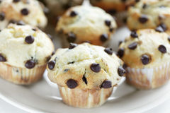 Chocolate Chips Muffins Group Stock Photo