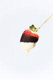 Chocolate coated strawberries on the sticks. Single strawberry coated with dark and white chocolate, placed on the sticks and with isolating background Royalty Free Stock Photos