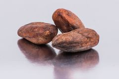 Chocolate cocoa beans isolated on white background Royalty Free Stock Photos
