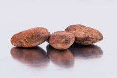 Chocolate cocoa beans isolated on white background Royalty Free Stock Images
