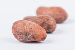 Chocolate cocoa beans  on white background Stock Images