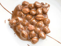 Chocolate covered hazelnuts Stock Image