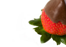 Chocolate covered strawberries. Three delicious chocolate covered strawberries with green leaves stock images
