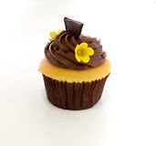 Chocolate cup cake in green dish Stock Photography