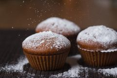 Chocolate cup cakes with powdered sugar stock image