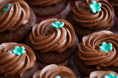 Chocolate cup cakes Stock Photos
