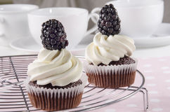 Chocolate cupcake with blackberry Stock Photos
