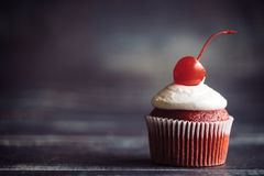 Chocolate cupcake with cherry Stock Images