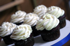 Chocolate Cupcakes Stock Photography