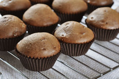 Chocolate cupcakes. Fresh homemade chocolate cupcakes closeup Royalty Free Stock Images