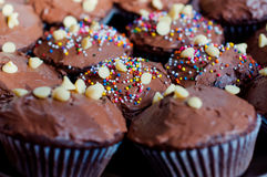 Chocolate cupcakes. With colorful sprinkles on Royalty Free Stock Photos