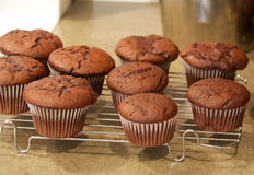 Chocolate cupcakes on cooling rack Stock Photo