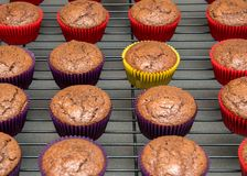 Chocolate cupcakes cooling on wire rack Stock Photo