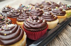 Chocolate Cupcakes Stock Image