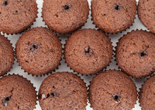 Chocolate cupcakes muffin Royalty Free Stock Image