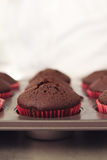 Chocolate cupcakes in tray with clear space Stock Photos