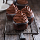 Chocolate cupcakes with whipped ganache Stock Photos