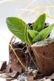 Chocolate dessert Stock Images