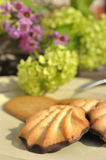 Chocolate dipped cookies Stock Photos