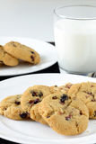 Biscoitos brancos do chocolate e da airela Fotos de Stock
