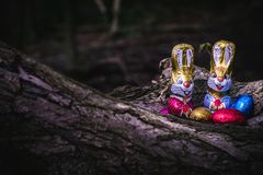 Chocolate Easter bunny and eggs hidden by a tree stock photos