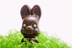 Chocolate Easter bunny,grass Stock Photos