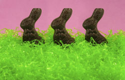 Chocolate Easter Bunny Trio. In the Grass Royalty Free Stock Photos