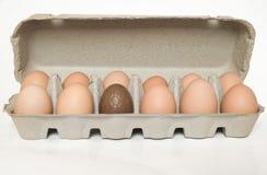 Chocolate egg in a carton Stock Image