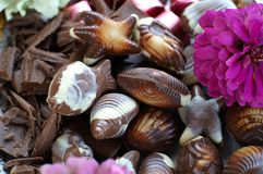 Chocolate with flower. Still life with various chocolate bonbons and flower Stock Photography