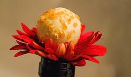 Chocolate Flower Stock Photography