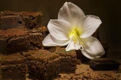 Chocolate Fudge Brownies Royalty Free Stock Images