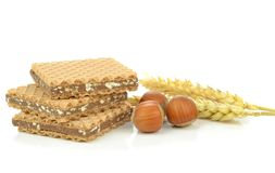 Chocolate and hazelnut biscuits Stock Photography