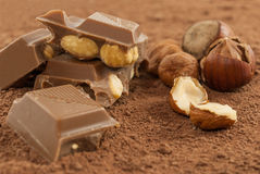 Chocolate with hazelnuts on cocoa powder Royalty Free Stock Image