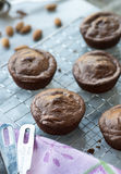 Chocolate Healthy Muffins Royalty Free Stock Image