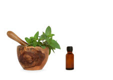 Chocolate Herb Mint Stock Image