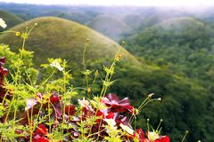 Chocolate hills. Bohol islend. Philippines. Flowers on a background of the chocolate hillsBohol islend. Philippines Stock Photo