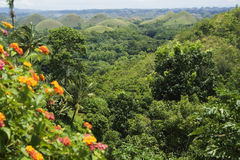 Chocolate hills and plants Stock Photos