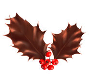 Chocolate Holly berry leaves isolated on white background. Royalty Free Stock Photo