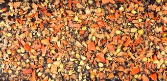 Chocolate and jalapeno Stock Photos